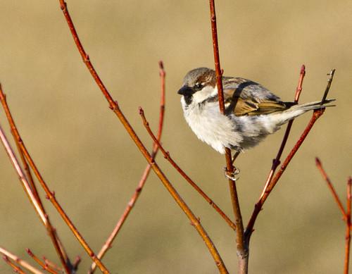 Backyard birding monday by Ricky L. Jones Photography