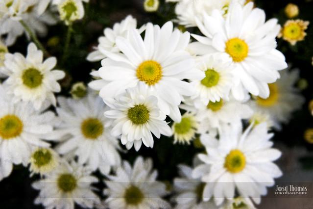 10_Una Flor