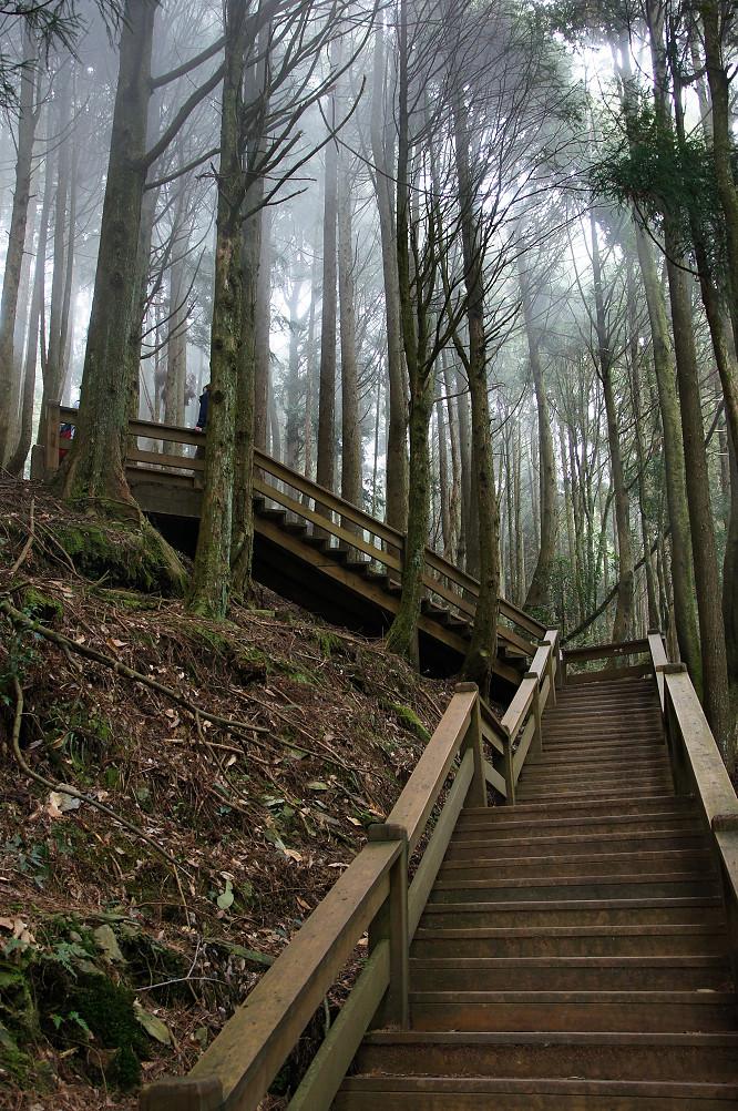 觀霧巨木步道-060