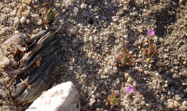 Desert Plants, Hwy 3