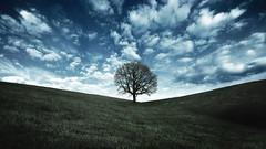 [フリー画像素材] 自然風景, 樹木, 丘, 草原 ID:201202141200