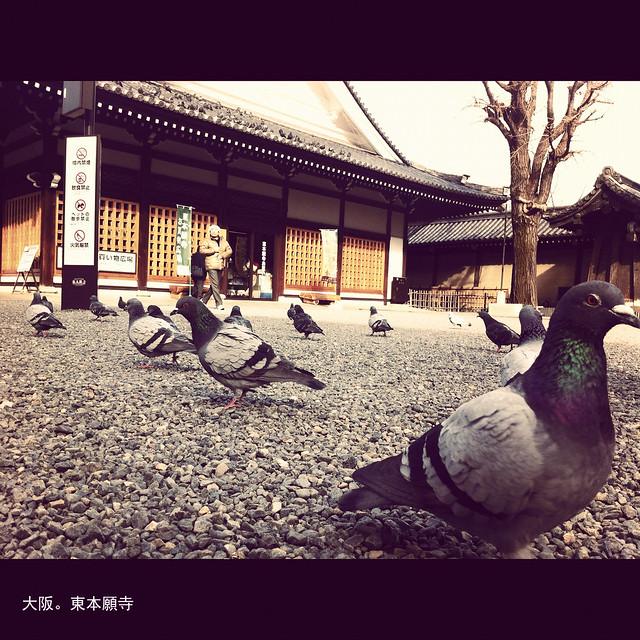 東本願寺。吳宇森來過。