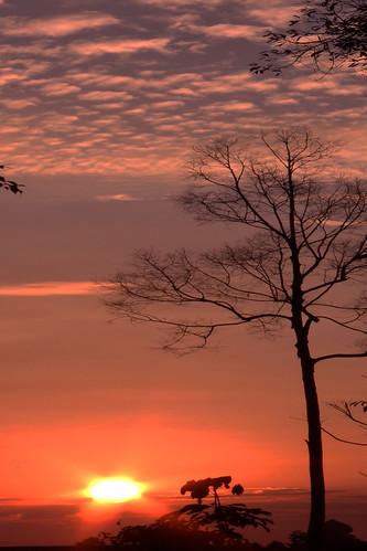 sumatra indonesia senja sore matahari riau siak pohon kering blinkagain rememberthatmomentlevel1 rememberthatmomentlevel2