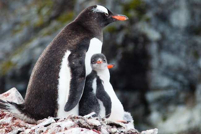 antarctica-blog-56