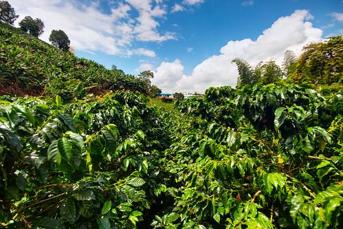 Colombia - Triángulo del Café 34