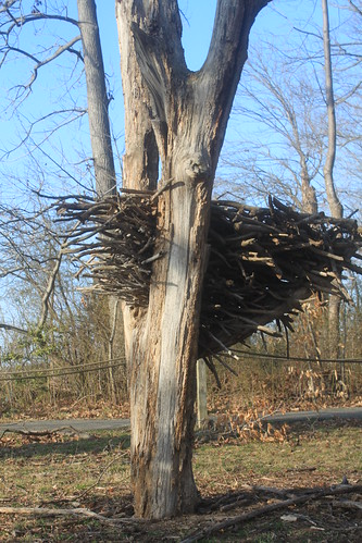 Mason Neck State Park - Beach Trail - Replica of Bald Eagle Nest