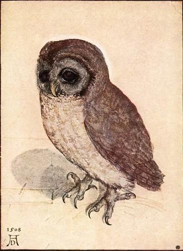 Albrecht D_rer - The Little Owl