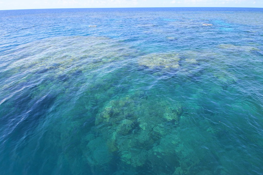 Great Barrier Reef : Cairns, Australia