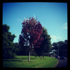 #thankfulthursday - This tree inspires me every year. I am so thankful for the reminder.