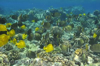 Best-snorkel-Honaunau2