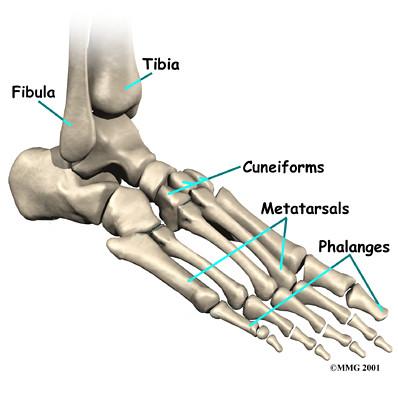 foot_anatomy_bones05 by c_27