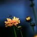 flower 4_42 by mondayshift