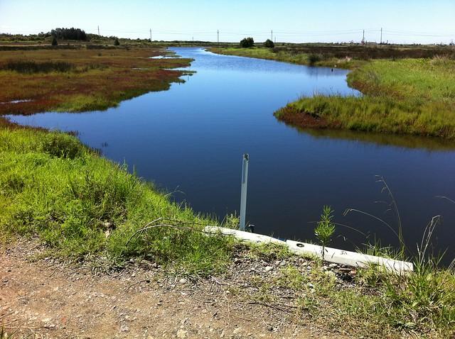 Ash island tide wader pond 1 flickr photo sharing for Garden pond waders
