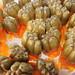 020_Frutto pandano in latte di cocco