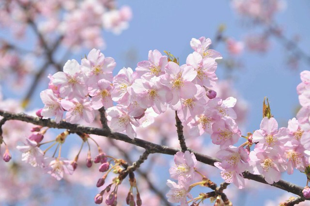 春のうららの
