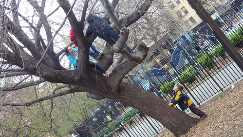 Tree Climbers in Tompkins Square Park