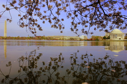 Blossoms_reflection