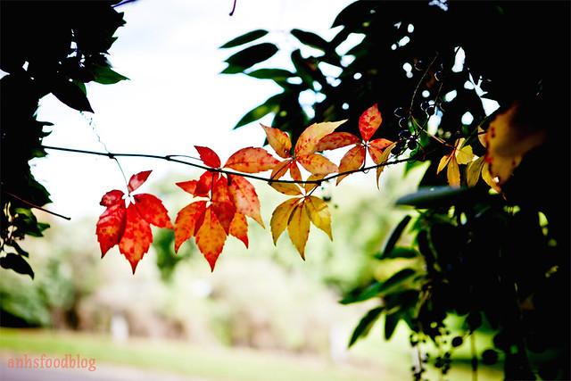 Autumn... 2012