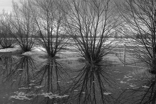 Field Reflections 1