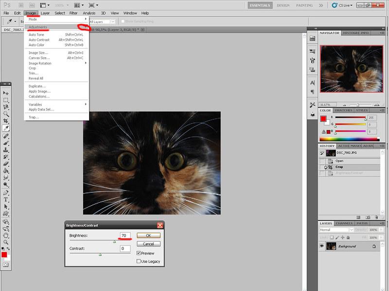 Зеленая виртуальная кошка 7054282759_1bb84f8588_c