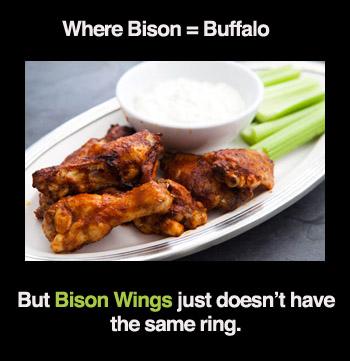 bison-buffalo