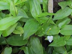 produce(0.0), shrub(1.0), flower(1.0), leaf(1.0), plant(1.0), herb(1.0), green(1.0), vietnamese coriander(1.0),
