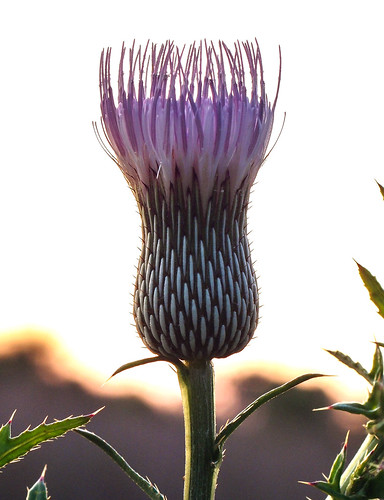 geminispringsparkdebaryflorida wildflowergeminispringsparkdebaryflorida