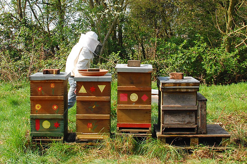 Bienen imkern Imkerei Imkerarbeiten Neckarhausen
