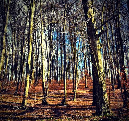 wood peace croatia koprivnica šuma