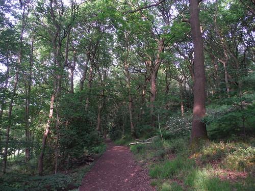 Parkbank Wood