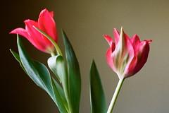FLOWERS FOR JULIA