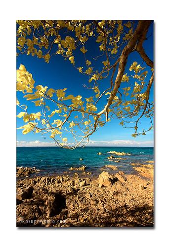 pantai pulau putus