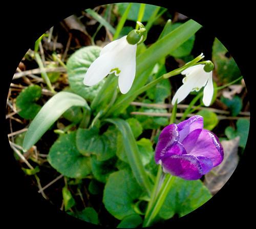 Fleurs de printemps 2012017v width=