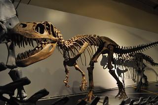 http://hojeconhecemos.blogspot.com.es/2012/03/do-museu-nacional-de-ciencias-naturais.html