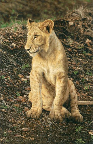 "'Young Lion' oil on board 23"" x 15"