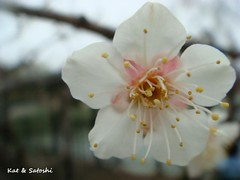 suigetsu2012