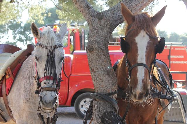 caballos romería ermita de la magdalena