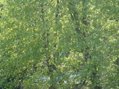 Vert printemps width=