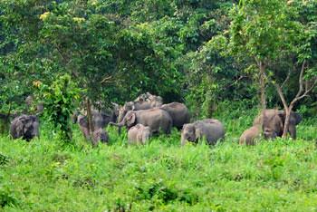 Elephant....s