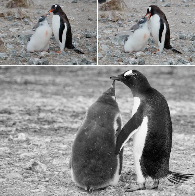 antarctica-blog-25