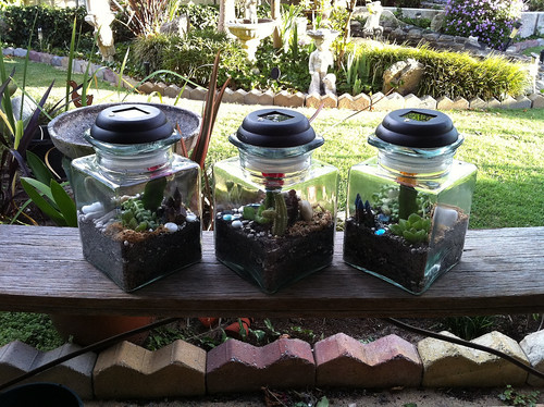 Three Terrariums