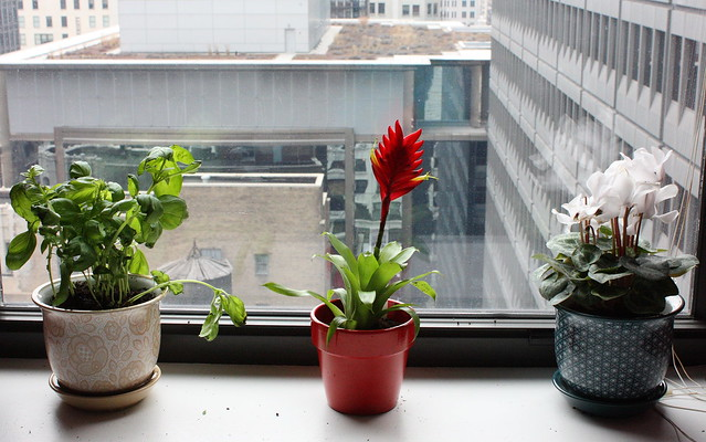 Garden Windowsill