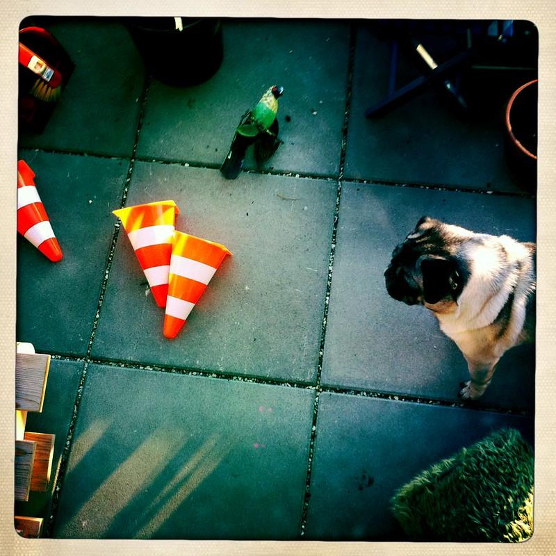Moritz versucht dem Mops Kunststücke beizubringen ...