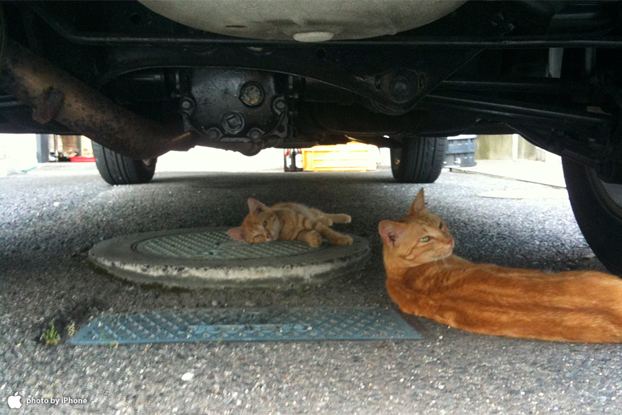ネコ(車の下より)