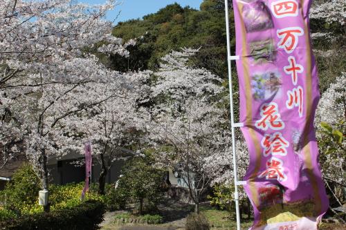sakura-t-2012-4-1-04