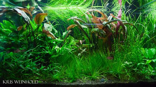 Neil's Aquarium