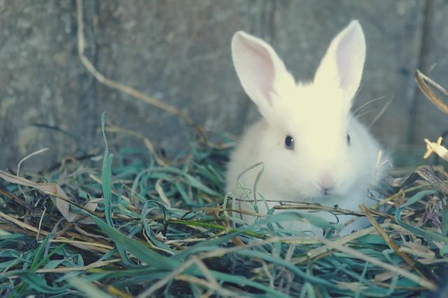 Little bunny <3