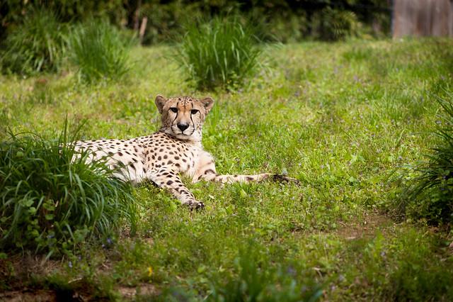 126 Washington DC zoo