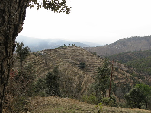 Terraced landscape in India's northern state of Uttarakhand