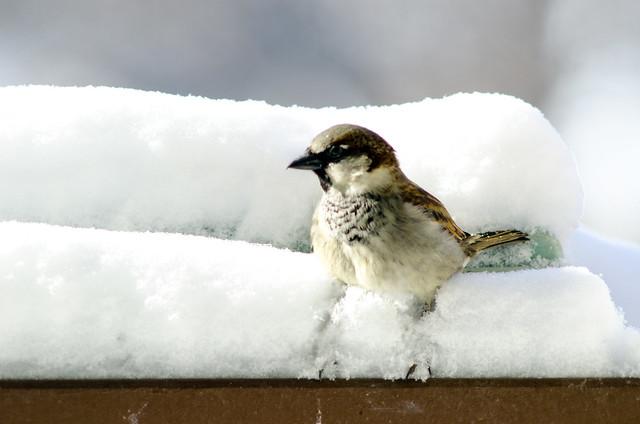 A Sparrow's Life...